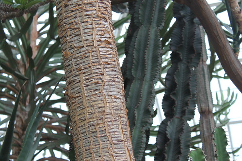 New York Botanical Gardens - Textures in African Desert Room