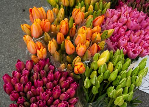 Kitsilano Farmers Market: tulips