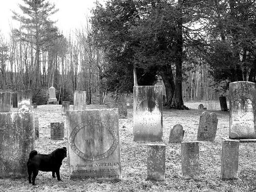 Pug & Graveyard, 2011