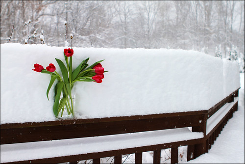 Tulips on deck