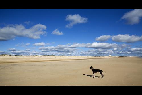 Jack on the Beach