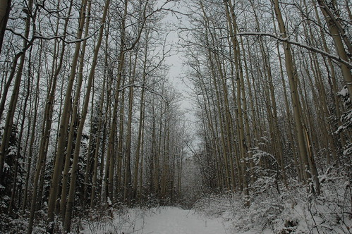 Twin Peaks hike scenery