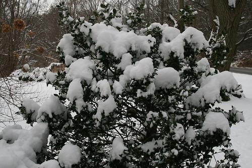 Looks like snow cones