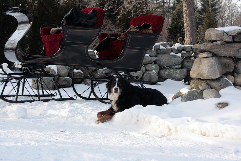 molly and the sleigh