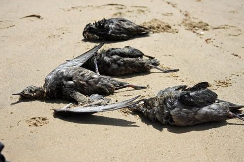mass-bird-deaths
