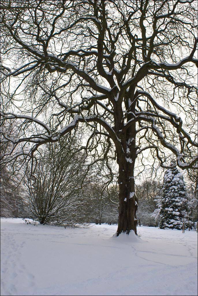 South Park | tree | snow