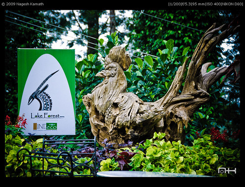Lake Forest Resort