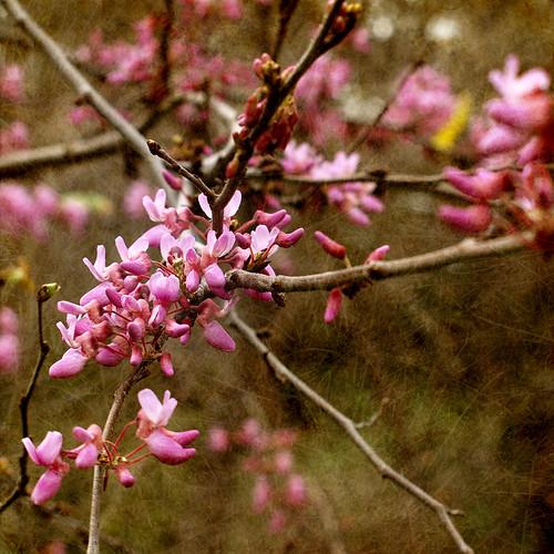 Pink Spring 4