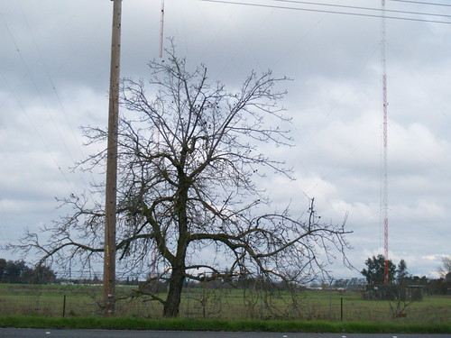 Bare tree 1