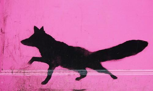 Fox on Pink