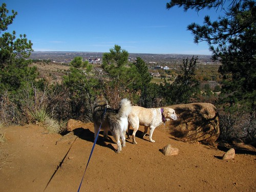 The dogs enjoy the view