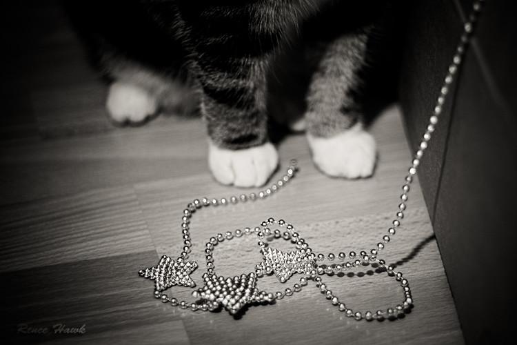 x-Mas paws