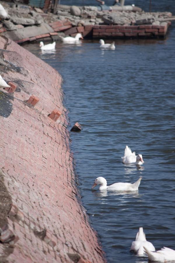 20110205_01_Beautiful Duckling_10