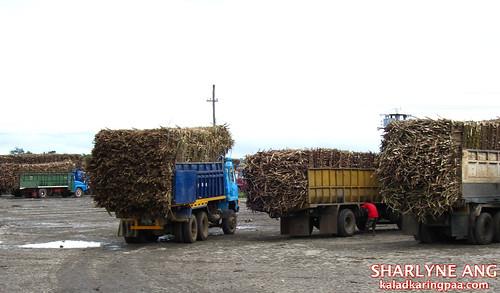 Truckloads of Sugarcane