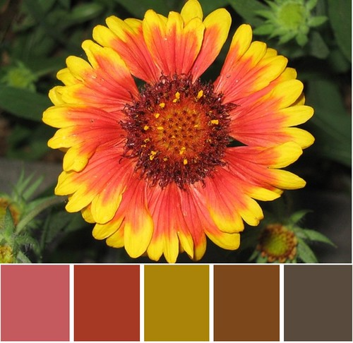 Blanket Flower Subtle