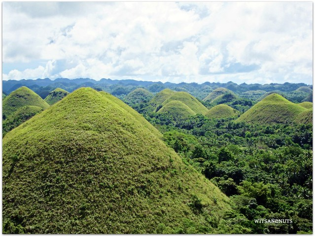 Chocolate Hills when they are green