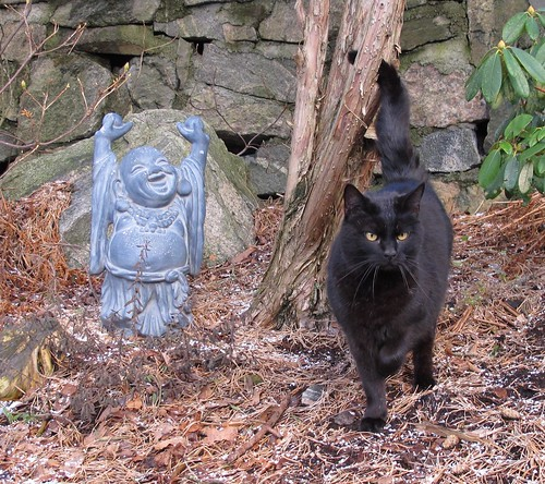 Cat and happy Buddha at Haukeberget