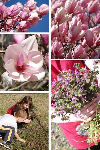 spring (683x1024)