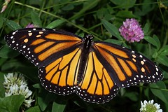 ARE YOU A BUTTERFLY PHOTOGRAPHER OR ARTIST?