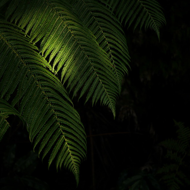 Fern and Cave