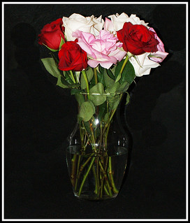 Roses for my Valentine