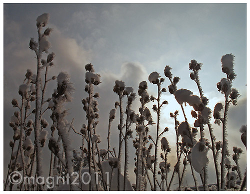 winter walk 1