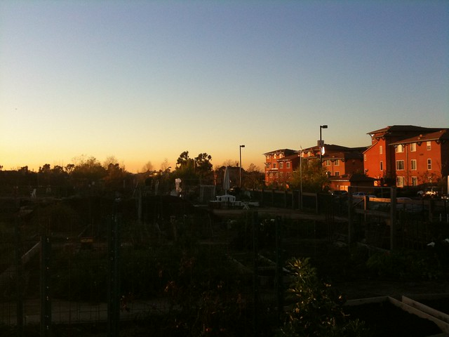 Sunset comes to the garden area