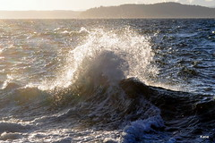 Waves crashing on the Puget Sound