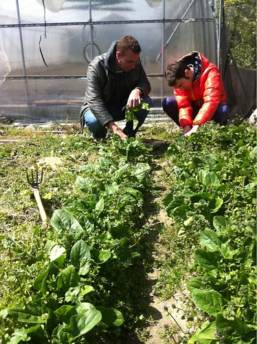 Collecting spinach in Fukuoka