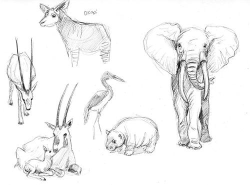 Animal exhibits