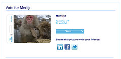 Please vote for my picture