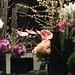 Les fleurs du Palais Royal