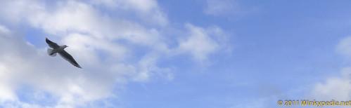 Blue sky in Mersea