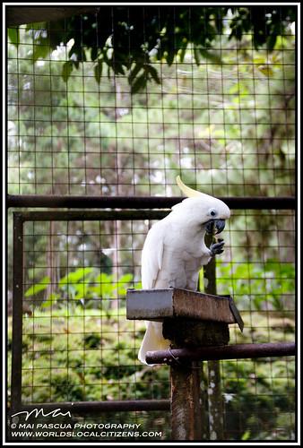 Davao Eden Nature Park 103 copy