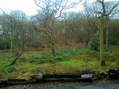 Queens Wood, Highgate, North London