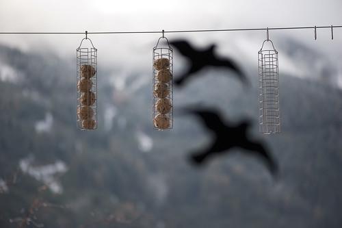 canederli uccellini_7006001 come oggetto avanzato-1