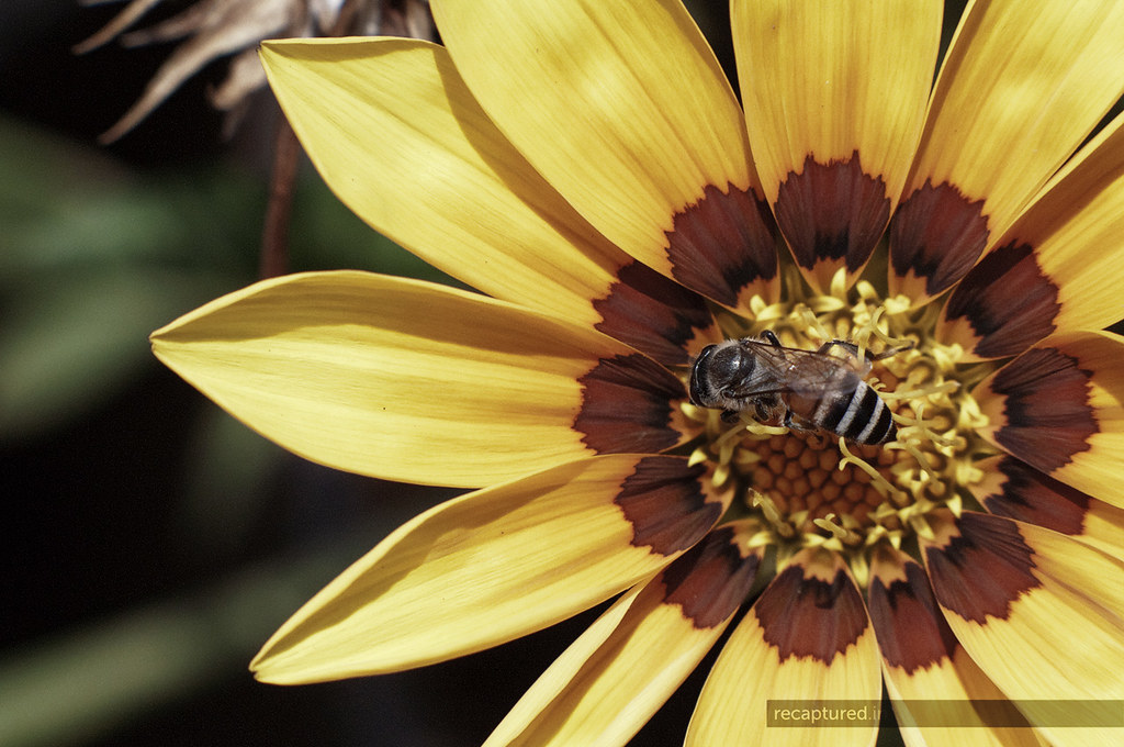 Happy Happy Bee