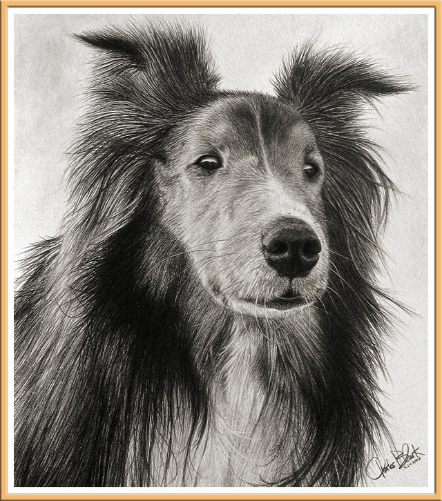 Lassie by Charles Black
