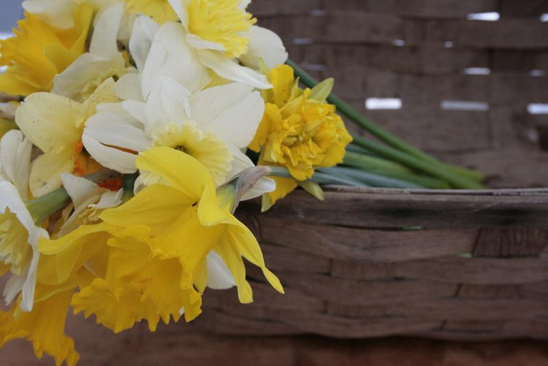 daffodils, basket