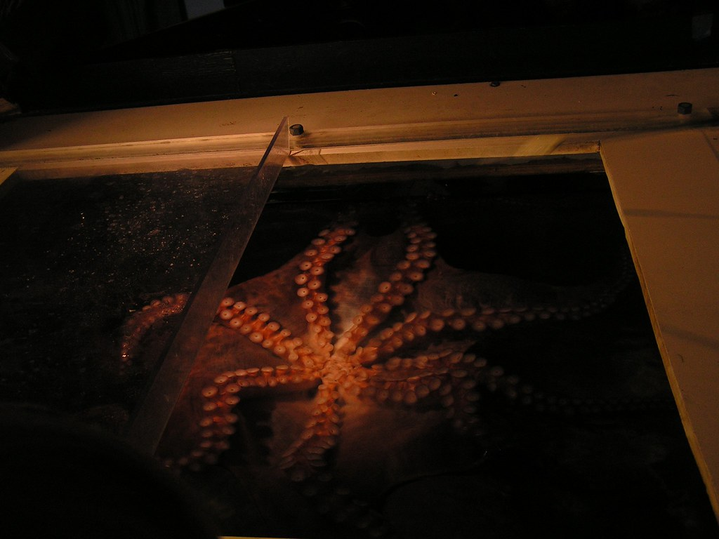 Octavius the octopus, National Zoo