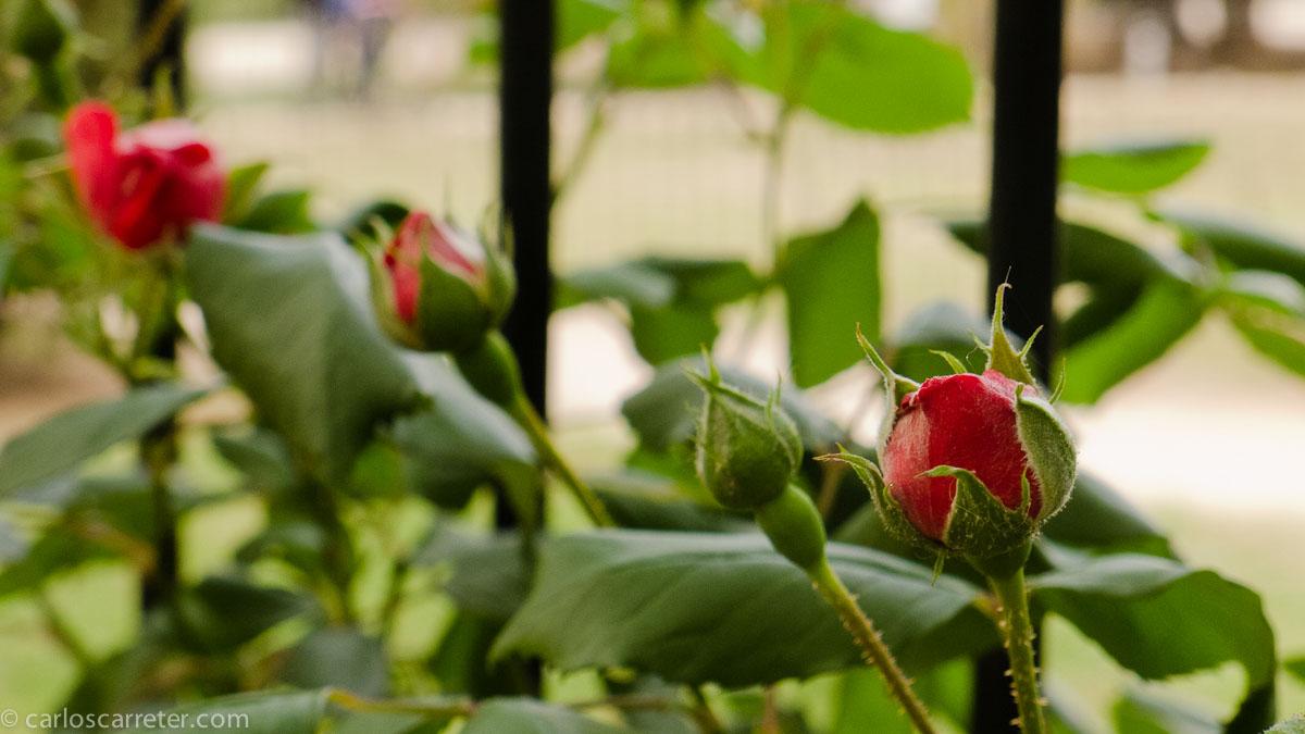 Verjas del Jardín Botánico