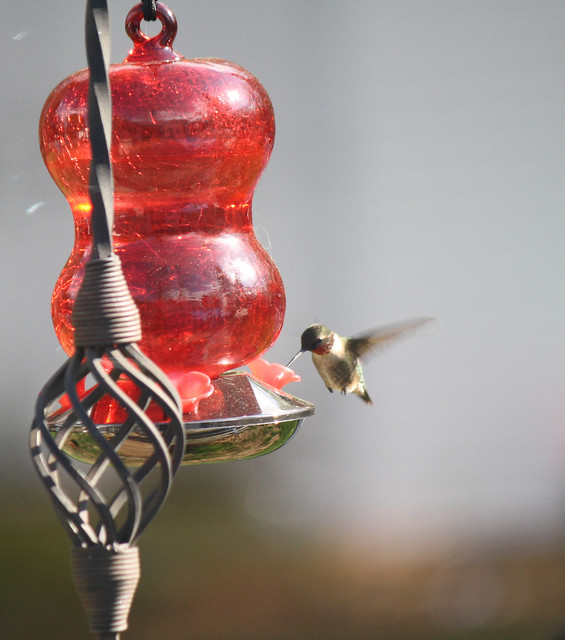 My first hummingbird picture!