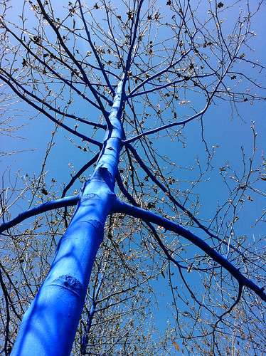 The Blue Trees-4