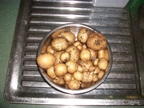 Fresh Picked Home Grown Potatoes
