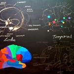 """limbic temporal functional 2 <a style=""""margin-left:10px; font-size:0.8em;"""" href=""""http://www.flickr.com/photos/30723037@N05/5867663346/"""" target=""""_blank"""">@flickr</a>"""