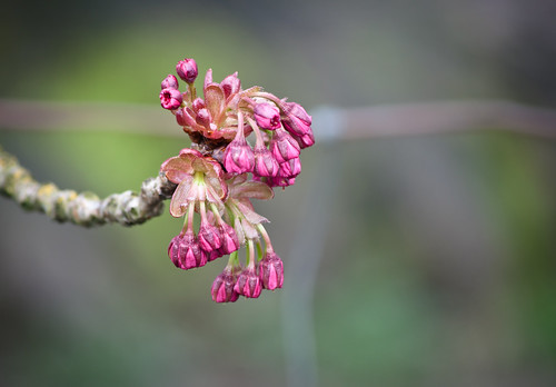 NW 25th Park Buds series 1 of 2