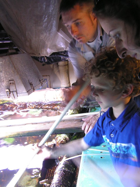 Reuben feeds the anemones, National Zoo