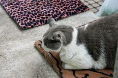 江の島めぐり―花の広場の猫(Cat, Enoshima, 2011)