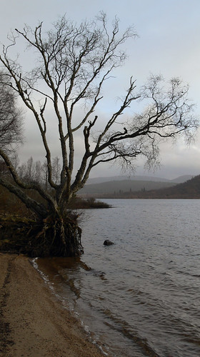 Banks of Loch Rannoch