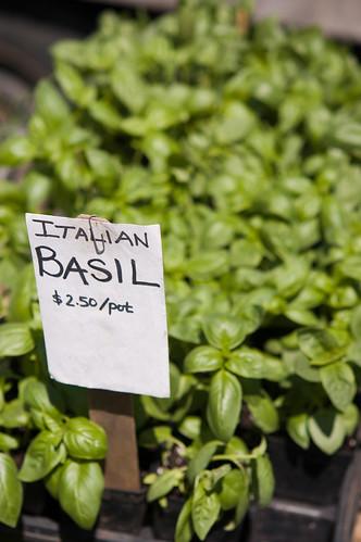 How much do I love basil?